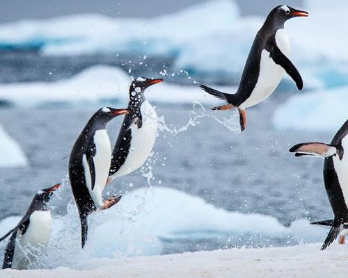 dest-antartica