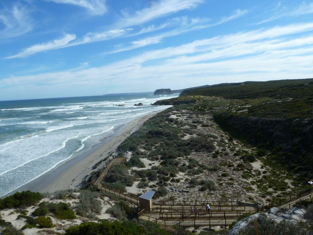 Seal Bay (2)